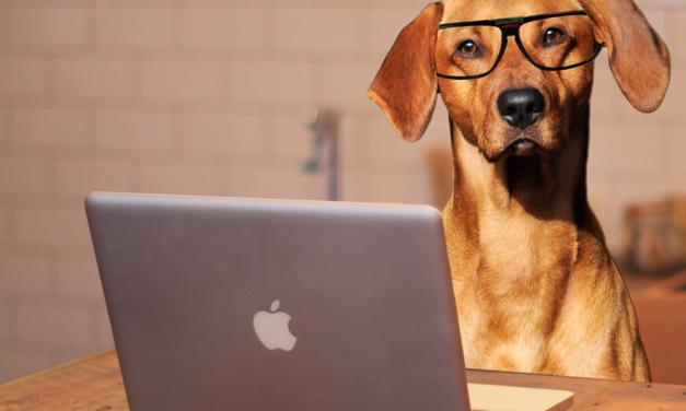 Seu pet já tá ligado na nova ração Nutree Performance Premium. E você?